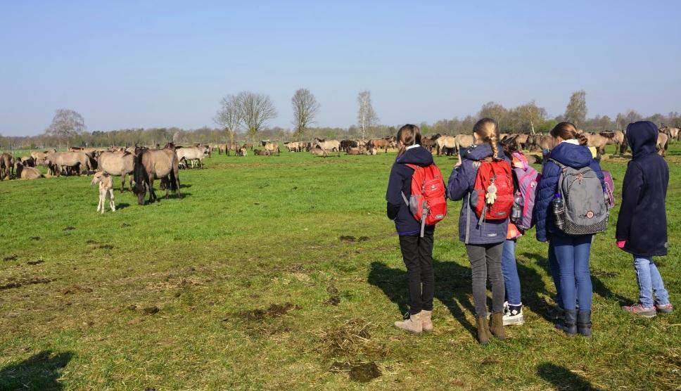 Fünftklässler besuchen die Dülmener Wildpferde